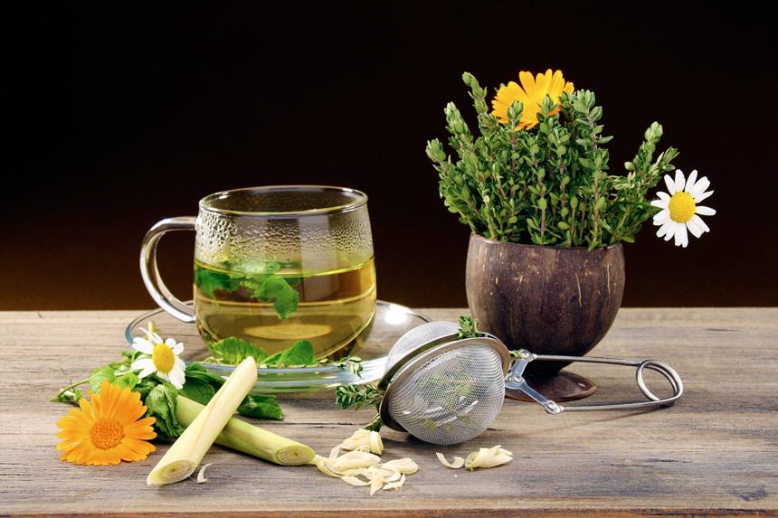 piante-medicinali-573